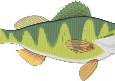 cartoon-fish-perch